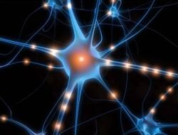 neuropeptide